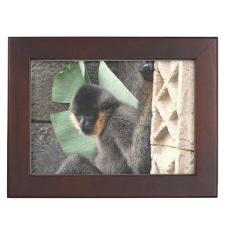 Young Capuchin Monkey Memory Box