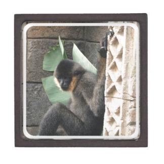 Young Capuchin Monkey Premium Jewelry Box
