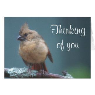 Young cardinal photo card