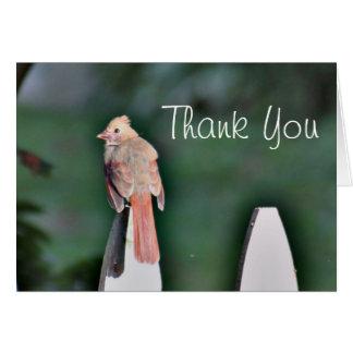 Young cardinal thank you card