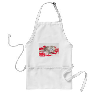 Young cat between red autumn leaves adult apron
