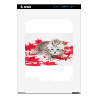 Young cat between red autumn leaves skin for iPad 3
