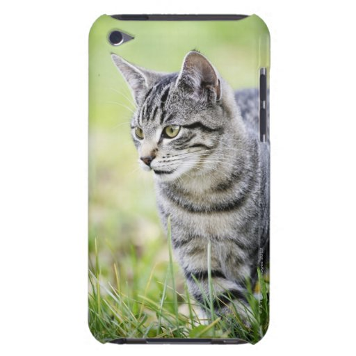 Young cat in nature barely there iPod cover