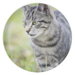 Young cat in nature party plates
