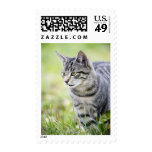 Young cat in nature postage stamps
