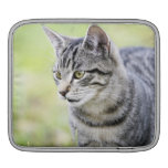 Young cat in nature sleeve for iPads