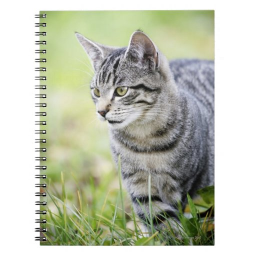 Young cat in nature spiral notebook