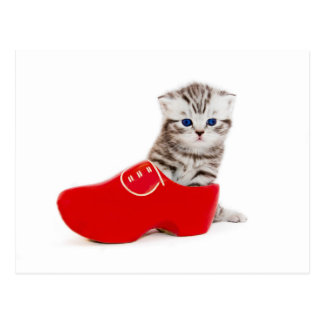 Young cat in red wooden shoe or clump postcard
