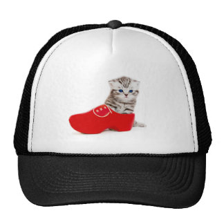 Young cat in red wooden shoe or clump trucker hat