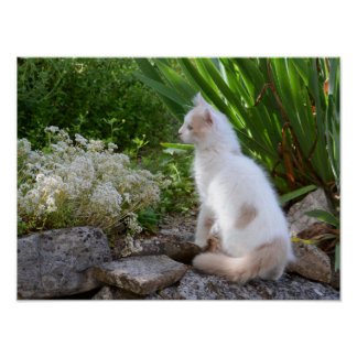 Young cat in the garden - poster paper