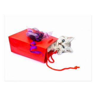 Young cat lying in red bag with decoration postcard