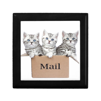 Young cats in cardboard box with word Mail