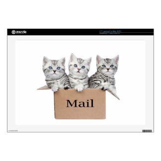 Young cats in cardboard box with word Mail Laptop Skins