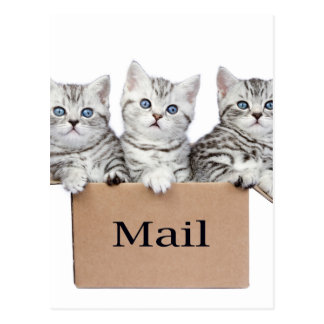 Young cats in cardboard box with word Mail Postcard