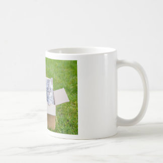 Young cats in cartboard box on grass coffee mug