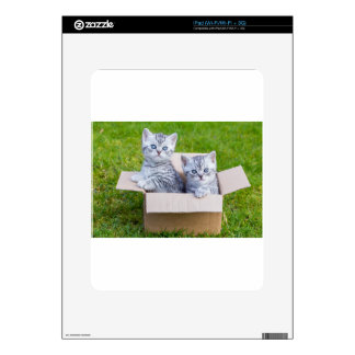 Young cats in cartboard box on grass iPad skin