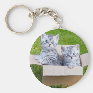 Young cats in cartboard box on grass keychain