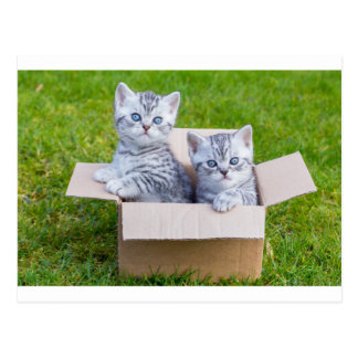 Young cats in cartboard box on grass postcard