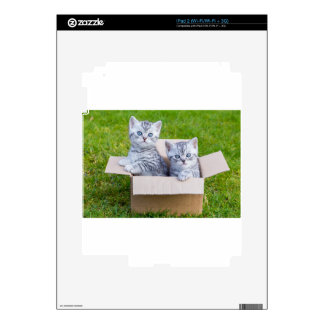 Young cats in cartboard box on grass skin for the iPad 2