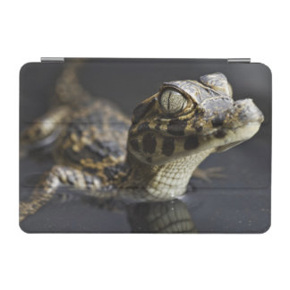 Young cayman in water with reflection iPad mini cover
