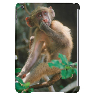Young Chacma Baboon (Papio Ursinus) Sitting Case For iPad Air