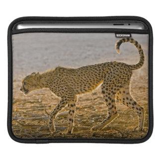 Young Cheetah (Acinonyx Jubatus) Stalks Sleeve For iPads