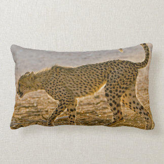 Young Cheetah (Acinonyx Jubatus) Stalks Lumbar Pillow