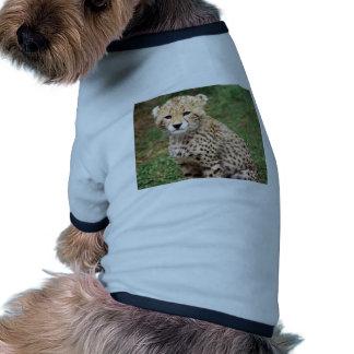 Young Cheetah Cub Dog Clothing