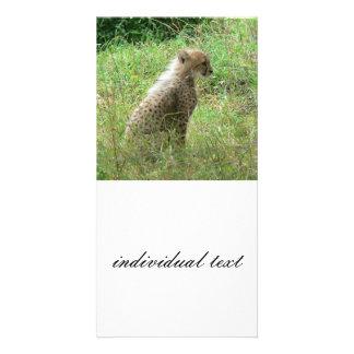 young cheetah photo greeting card