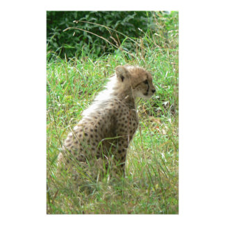 Young cheetah stationery