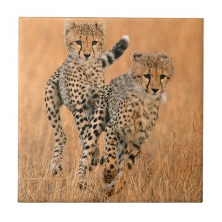 Young Cheetahs (Acinonyx Jubatus) Running Ceramic Tile