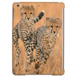 Young Cheetahs (Acinonyx Jubatus) Running Cover For iPad Air