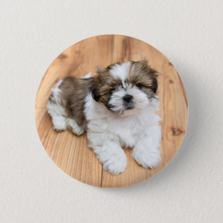 Young Chi Chu dog lying on parquet floor Pinback Button