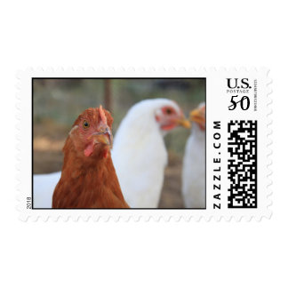 Young Chickens Postage