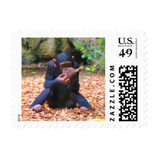 young chimpanzee 03 postage stamps