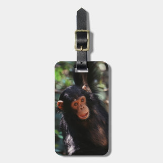 Young Chimpanzee hanging at forest Bag Tag