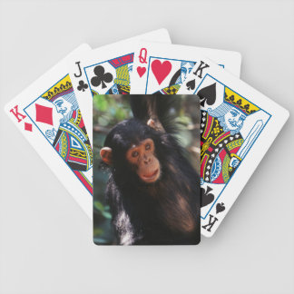 Young Chimpanzee hanging at forest Bicycle Playing Cards