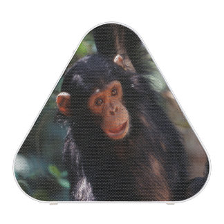 Young Chimpanzee hanging at forest Bluetooth Speaker