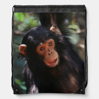 Young Chimpanzee hanging at forest Drawstring Bag