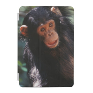 Young Chimpanzee hanging at forest iPad Mini Cover