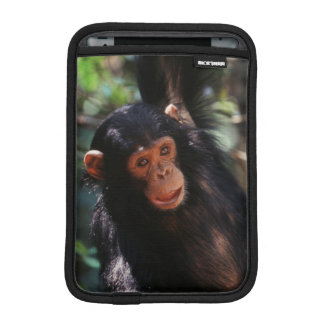 Young Chimpanzee hanging at forest iPad Mini Sleeve