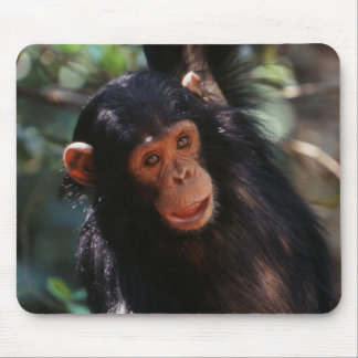 Young Chimpanzee hanging at forest Mouse Pad