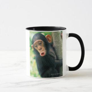 Young Chimpanzee (Pan troglodytes) Mug