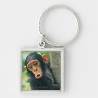 Young Chimpanzee (Pan troglodytes) Silver-Colored Square Keychain