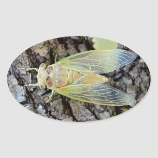 Young cicada on branch oval sticker