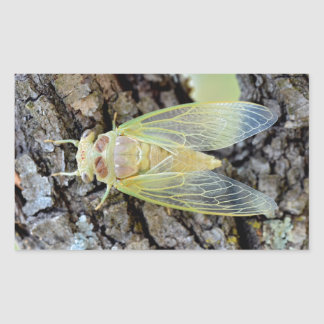 Young cicada on branch rectangular sticker