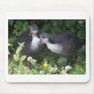 Young Coots Mouse Pad