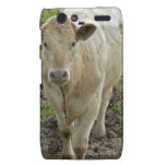 Young Cream Bull at water hole Droid RAZR Covers