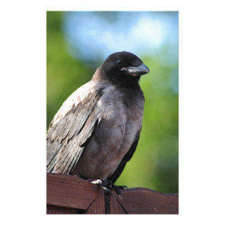 Young Crow Stationery