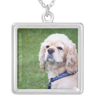 Young cute dog posing. silver plated necklace